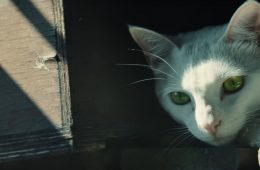 Ghost Recon: Wildlands tráiler gato