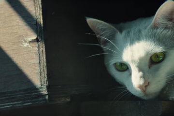 Ghost Recon: Wildlands tráiler gato
